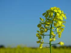 fabricante-de-fertilizantes-liquidos-agrifluide