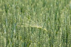 fertilizantes-liquidos-agrifluide