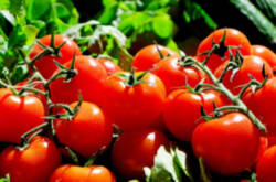 productos-para-la-agricultura-agrifluide